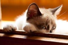 Конец-вверх котенка внутри помещения Стоковые Фото