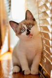 Конец-вверх котенка внутри помещения Стоковые Фотографии RF