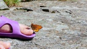 Конец-вверх, красивая оранжевая бабочка горы завихряется и летается над ногой ` s ребенка в сандалиях бабочка сидит на сток-видео