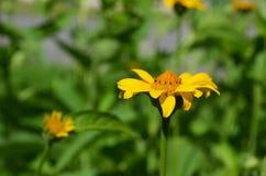 Конец-вверх красивого и яркого цветка Стоковое Изображение