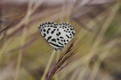 Конец-вверх красивой бабочки в саде Стоковые Изображения RF
