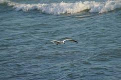 Конец-вверх красивой чайки, природа, Seascape, Сицилия, Италия, Европа стоковые изображения rf