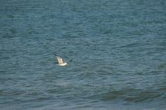 Конец-вверх красивой чайки, природа, Seascape, Сицилия, Италия, Европа стоковое фото