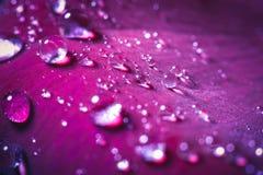 Конец-вверх красивый поднял с падениями воды Стоковые Фото