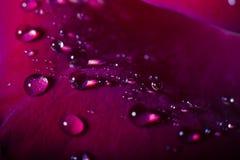 Конец-вверх красивый поднял с падениями воды Стоковая Фотография RF