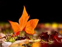 Конец-вверх красивых лист осени на поле стоковое изображение