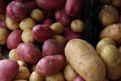 Конец-вверх красных и белых картошек Стоковая Фотография