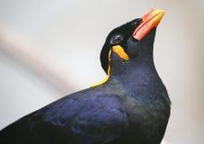Конец-вверх красочной птицы на парке в Куалае-Лумпур Стоковые Изображения RF
