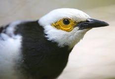 Конец-вверх красочной птицы на парке в Куалае-Лумпур Стоковые Фото