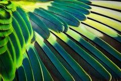 Конец-вверх крыла волнистого попугайчика Стоковая Фотография RF