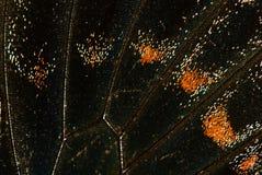 Конец-вверх крыла бабочки, предпосылка Стоковые Изображения