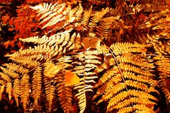 Конец-вверх листьев в лесе осени стоковые фотографии rf