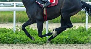 Конец-вверх лошади идущий Стоковое Изображение RF