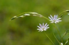 Конец-вверх макроса стоцвета поля Стоковое Изображение
