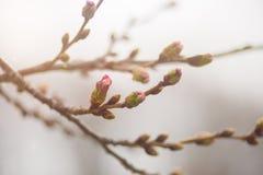 Конец-вверх макроса цветков весны на ветвях против запачканной предпосылки стоковое фото rf