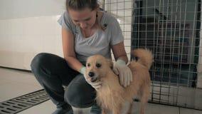 Конец-вверх маленькой девочки petting проарретированная бездомная собака в укрытии любимца r акции видеоматериалы