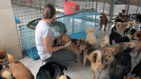 Конец-вверх маленькой девочки petting проарретированные бездомные собаки в укрытии любимца r сток-видео