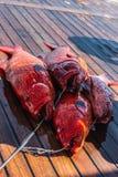 Конец-вверх морского окуня красного коралла на палубе стоковые изображения rf