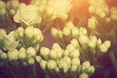 Конец-вверх молодое растущего свежих цветков на луге утра весны, Стоковая Фотография RF