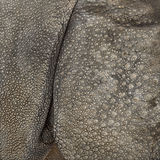 Конец-вверх на коже индийского носорога Стоковое фото RF