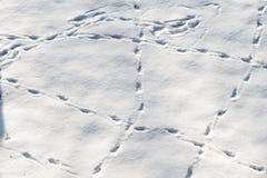 Конец вверх на трассировке свежих и дикого животного на снеге Стоковые Изображения RF