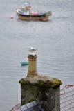 Конец-вверх на чайке садился на насест на крыше обозревая гавань Portree удя, остров Skye, гористые местности, Шотландию, Великоб Стоковые Фотографии RF