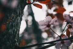 Конец-вверх небольшого света - розовых цветков стоковое фото rf