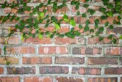 Конец-вверх облыселых кипарисов с красочными листьями в осени Стоковые Фото