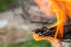 Конец-вверх огня дыма конца-Вверх деревянного огня деревянный Стоковая Фотография