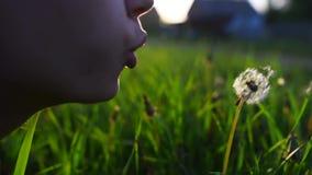 Конец-вверх одуванчика девочка-подростка дуя на заходе солнца видеоматериал