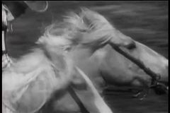 Конец-вверх 2 лошадей бежать шея и шея в гонке видеоматериал