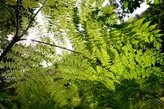 Конец-вверх папоротника в лесе при солнце светя до конца Стоковая Фотография RF
