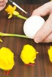 Пасхальное яйцо картины Стоковые Изображения