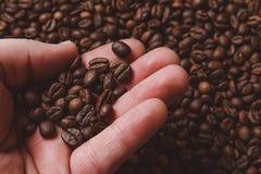 Конец-вверх пальцев показывая зажаренное в духовке кофейное зерно Стоковое Изображение