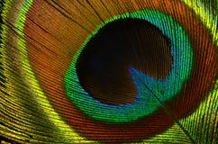 Конец-вверх пера павлина Стоковая Фотография RF