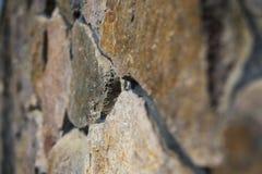 Конец-вверх поверхности естественной каменной загородки Каменная стена как предпосылка стоковые изображения