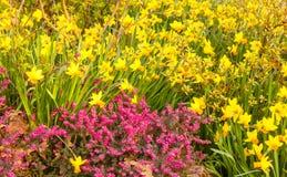 Конец-вверх покрашенное цвести Стоковое Изображение