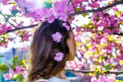 Конец вверх по волосам девушки от задней части с розовыми цветками в ее волосах с деревом Сакуры цветения на предпосылке стоковое изображение rf