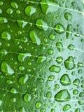 Конец вверх по красивым падениям воды на зеленых лист Стоковое Фото