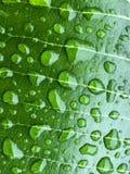 Конец вверх по красивым падениям воды на зеленых лист Стоковое фото RF