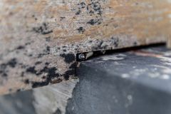 Конец вверх по маленьким улиткам с раковиной которые защищают стоковая фотография rf