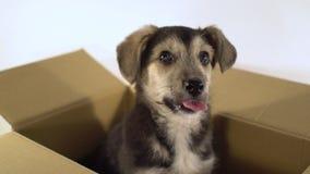 Конец вверх по милой собаке щенка сидит в коробке почтового сбора Стоковое Изображение