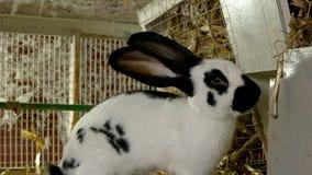 Конец вверх по милому кролику в hutch стоковые фото