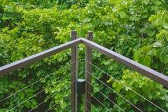 Конец вверх по перилам металла деревянной прогулки неба или дорожка пересекают сверх treetop окруженный с зеленое естественным и  стоковые фотографии rf