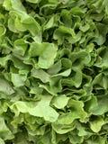 Конец вверх по свежему зеленому дисплею салата дуба стоковая фотография