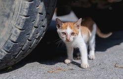 Конец вверх по случайному тощему оранжевому котенку под автомобилем со шрамами на стороне стоковая фотография rf