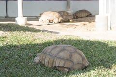 Конец вверх по черепахе отдыхая в саде стоковое фото rf