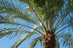 Конец-вверх предпосылки пальм принятое солнечное ладони листьев дня Стоковое Изображение