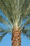 Конец-вверх предпосылки пальм принятое солнечное ладони листьев дня Стоковое Фото