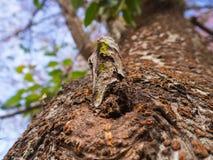 Конец-вверх предпосылки ствола дерева и нерезкости Стоковая Фотография RF